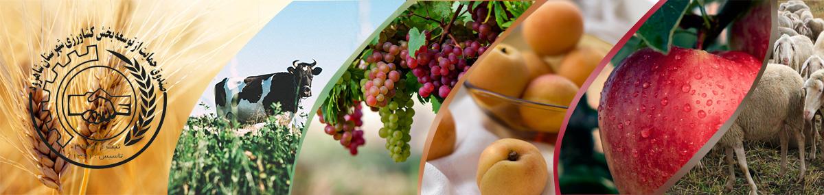 بازاریابی محصولات کشاورزی